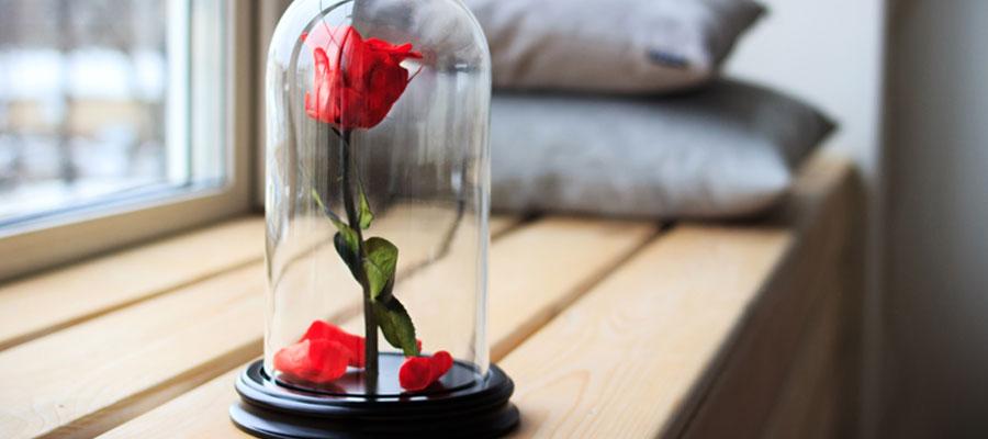 Opter pour une rose sous cloche